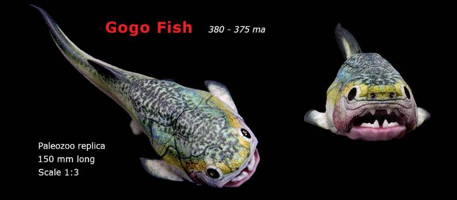 Placoderm Gogo Fish model Paleozoo replica